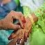 Pakej Perkahwinan 2011,pelamin 3 panel,andaman,pengantin,baju pengantin