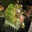 sewaan dulang & bakul , cenderahati ( fokus kepada bunga dip ) & rekaan gubahan bunga terkini