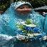 Andaman Abby Padi