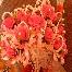 Bunga Pahar Mutiara