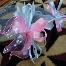 Nz Heritage Gift - Bunga Pahar