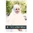 Solekan, pengantin, makeup, mekap, muslimah, fotografi, baju pengantin, dress pengantin, baju nikah, baju kahwin