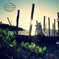 Aizuddin Idris Photography